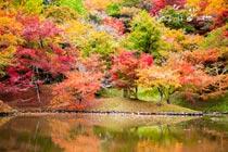 用作公園の紅葉